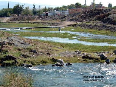 A.-mento-habitat