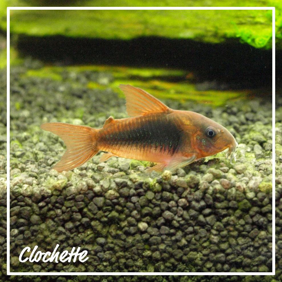 clochette01op3