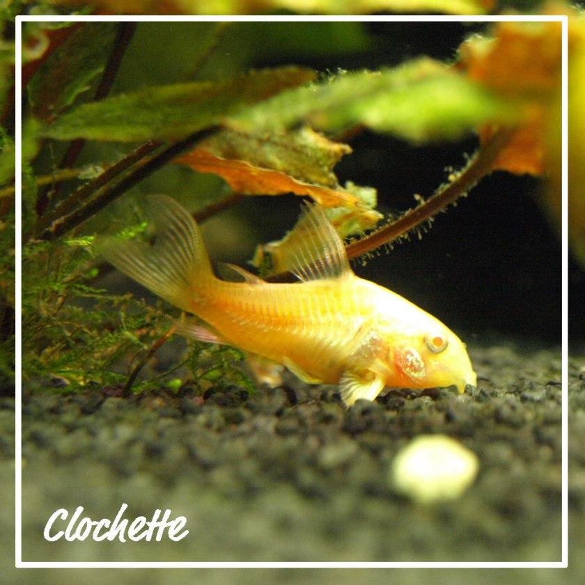 clochette02ql5