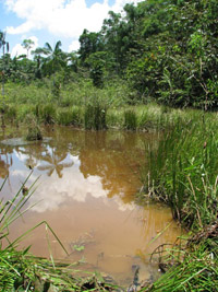 habitat-pres-de-iquitos-perou