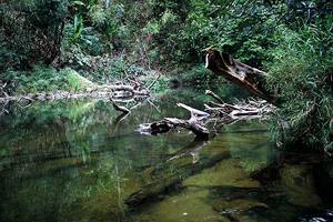 Songgaria-river-Thailand