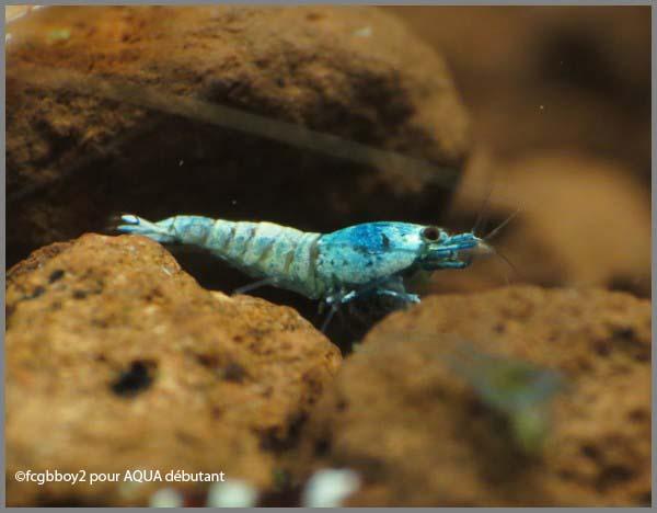 blue bolt.jpg