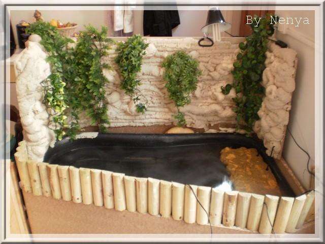 12° MESURANT15 CMS ENVIRON ACTUELLEMENT 6 PLANTS DE PAPYRUS ALTERNIFOLIUS