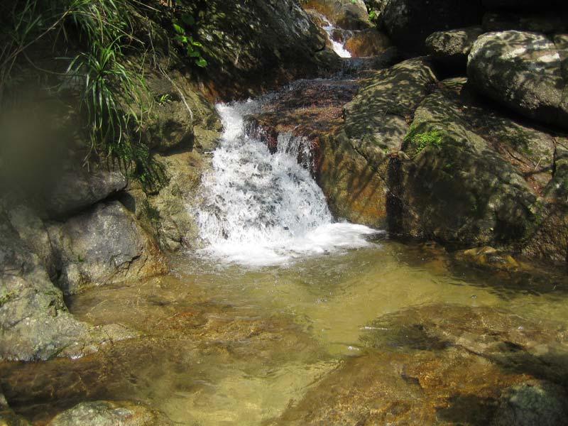 Stiphodon-habitat-Okinawa-Japan-1