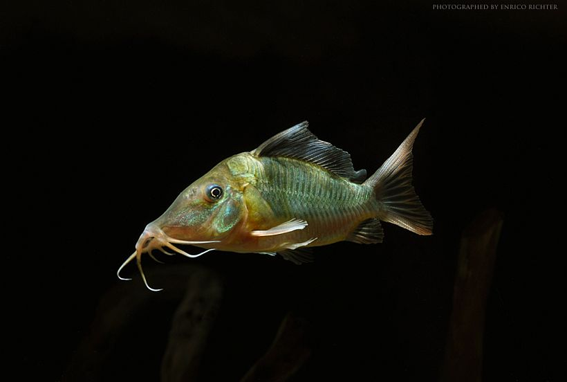 73d039c873 Les poissons de fond – AQUA débutant