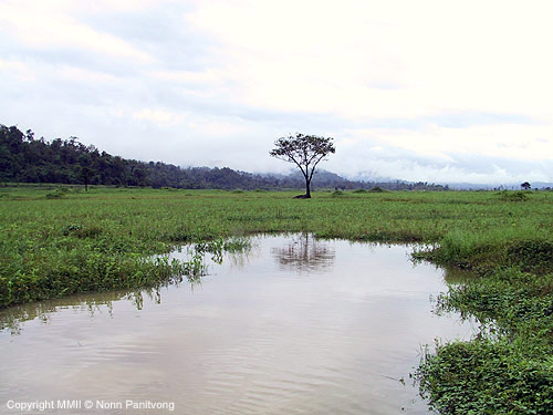 R.-trilineata-habitat-Bekee-River-floodplain